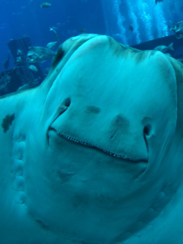 this happy stingray made me laugh so hard!!!