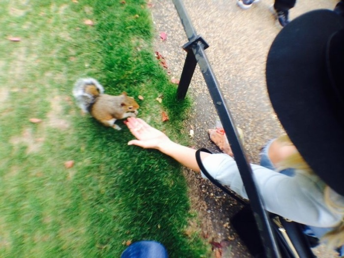 Feeding the Squirrels in Hyde Park